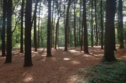Miško vertės nustatymas